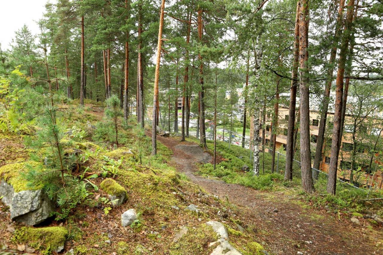 STISKOLE:  Stibygging har blitt et populært tiltak på Ingieråsen ungdomsskole. Foto: Cato/Eli Symrebu.