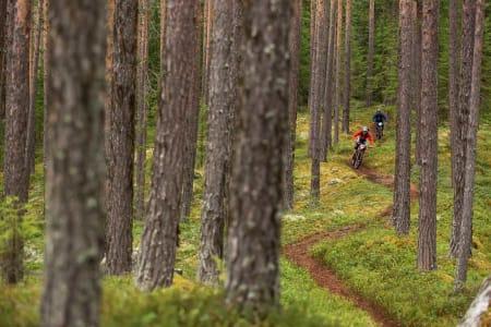 KLASSIKER: Nesbyen har med sitt rike stinettverk gode muligheter for å terpe på endurorelevant trening.