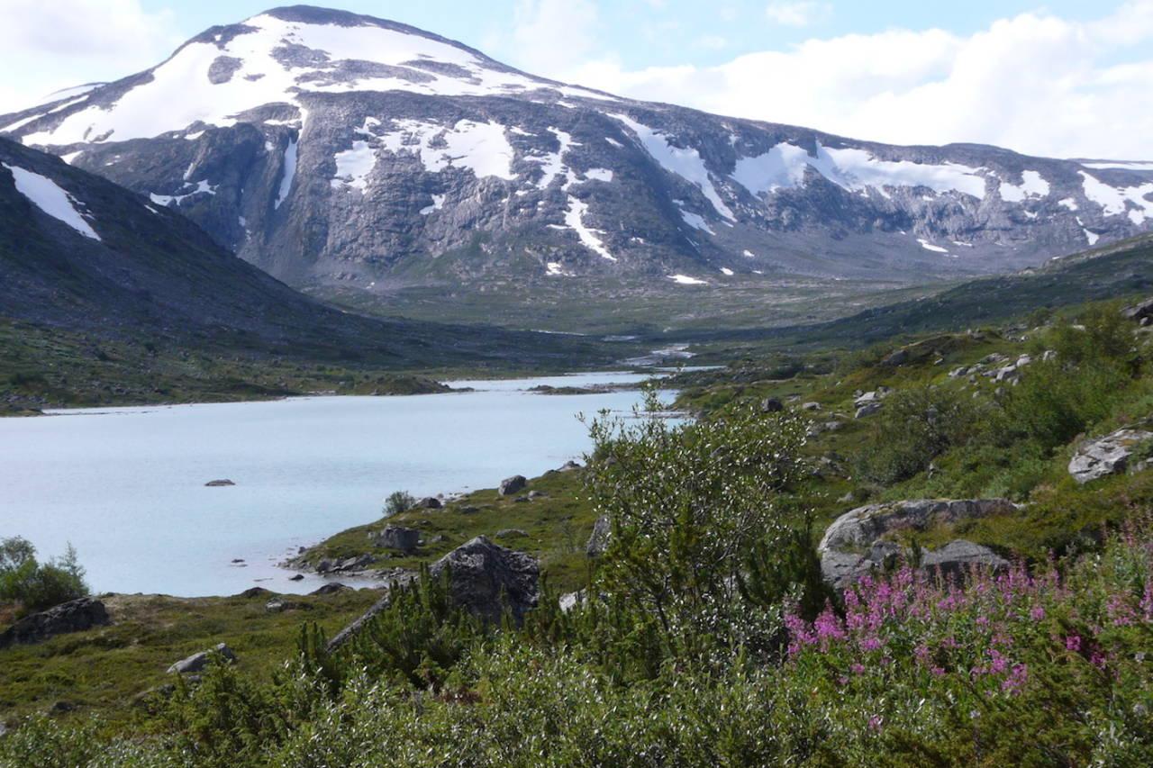 Stortinget vedtok Friluftsmeldingen som regjeringen la fram i mars, der det står at sykling på sti i nasjonalparker og verneområder som hovedregel skal være tillat. Foto: Wikimedia