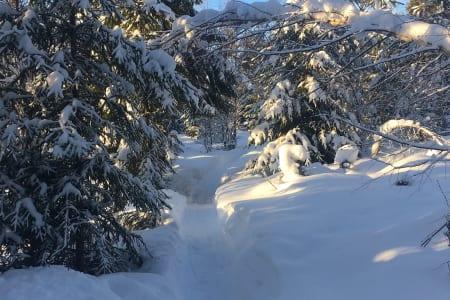 Enda flere trange vinterstier