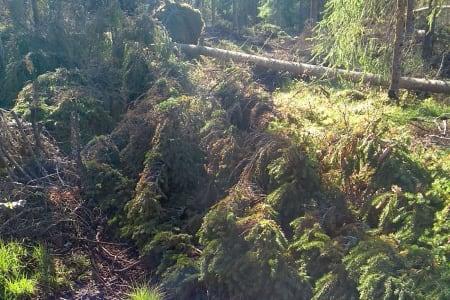 Nå må skogeier Løvenskiold rydde for syklistene