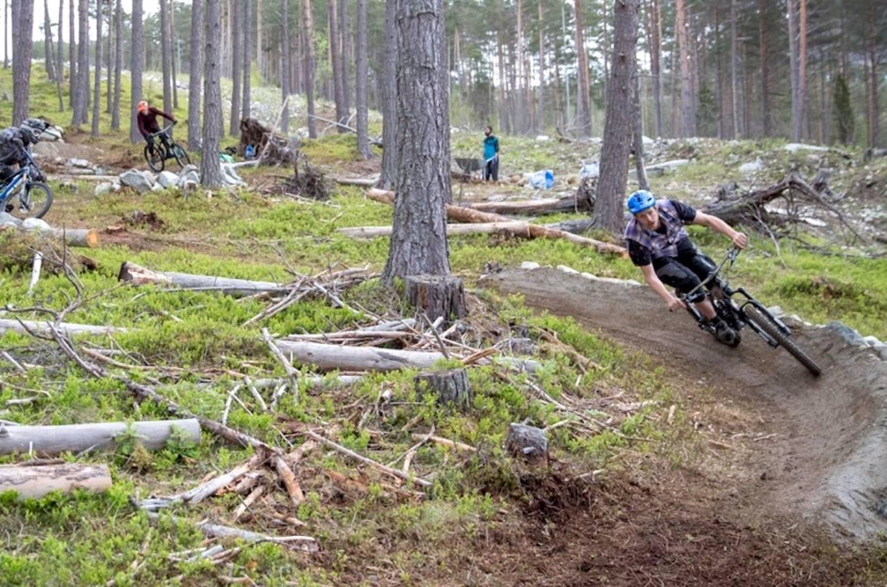 Stisyklistene i Sogndal har lagt ned mye arbeid i stiene på Kaupanger. Nå skal Vestlandsforsking kartlegge hva brukerne vet om området for å kunne koordinere sambruken bedre. Foto: Håvard Nesbø