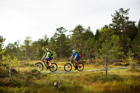 SIlje Holmsen og Torstein Heen får god hjelp av klopper over de mest våte partiene i Drammensmarka. / Stisykling i Norge.