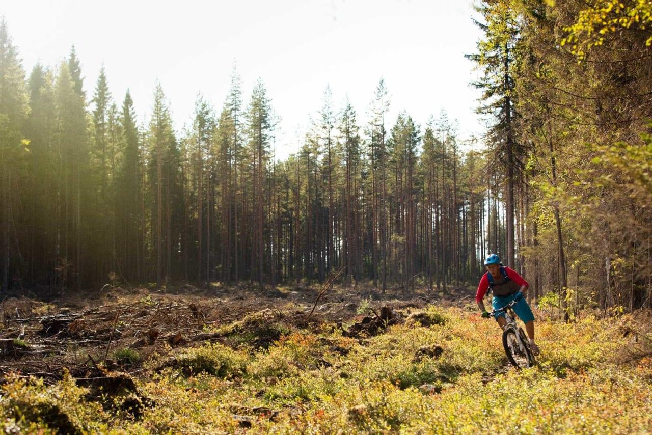 Jon André Haugen sykler over noe så uvanlig som hogstfelt i skogene ved Heradsbygda. / Stisykling i Norge.