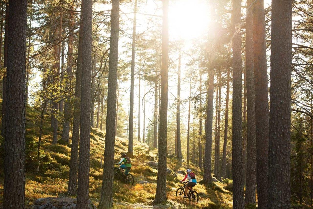Bare noen få hundre meter i luftlinje fra RV3 kan du sykle fine skogsstier i Grundsetmarka. / Stisykling i Norge.
