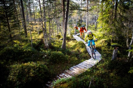 Kristian Brøndstad, Jens Petter Skårsmoen og Songre Børgeson Larsen på Hostostraden utenfor Oppdal. Foto: Terje Aamodt. / Stisykling i Norge.