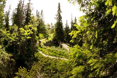 Flere av stiene i området over alpinanlegget går langs gamle vannføringskanaler fra gruvedriften. Sykle for all del ved siden av, ikke oppå disse gamle trekonstruksjonene! / Stisykling i Norge.