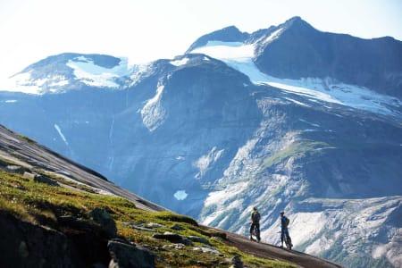 Noen dager og turer handler like mye om den totale opplevelsen, som selve syklingen. En tur over Reinnesfjellet i sola er en slik tur. / Stisykling i Norge.