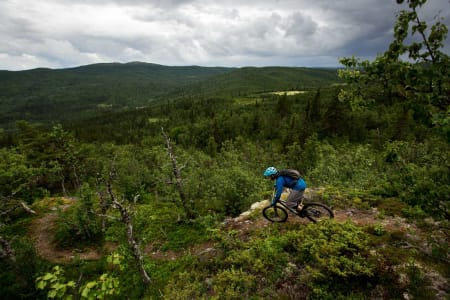 Knut Myking er stientusiast av rang, og har et nært forhold til Skurvehovda. Stien går ned til hjemgården på Myking. / Stisykling i Norge.