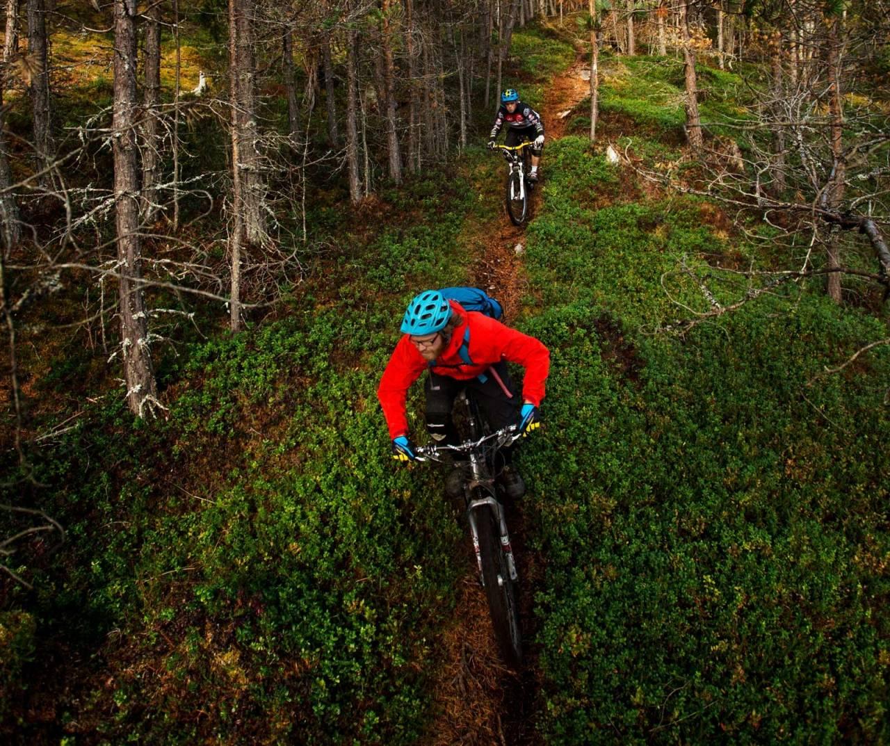Skogene rundt Kaupanger består nesten utelukkende av flytstier. Knut Myking og Stig Wigum slipper på ned mot kraftgata. / Stisykling i Norge.