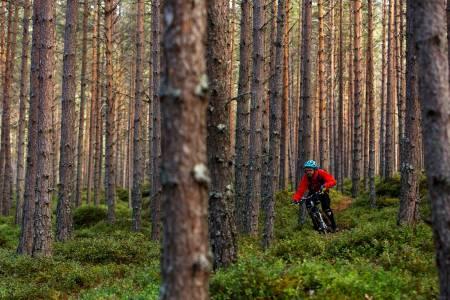 Flyplasstien har mye til felles med stiene på motsatt side av Kaupanger. Knut Myking blir liten blant store trær på Berg-og dalbane-stien. / Stisykling i Norge.