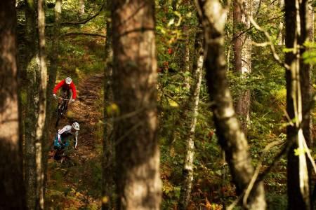 I den tette skogen i Kjerrane finnes mange stiperler. Øyvind Østvedt og Nick Leach leter blant trærne. / Stisykling i Norge.