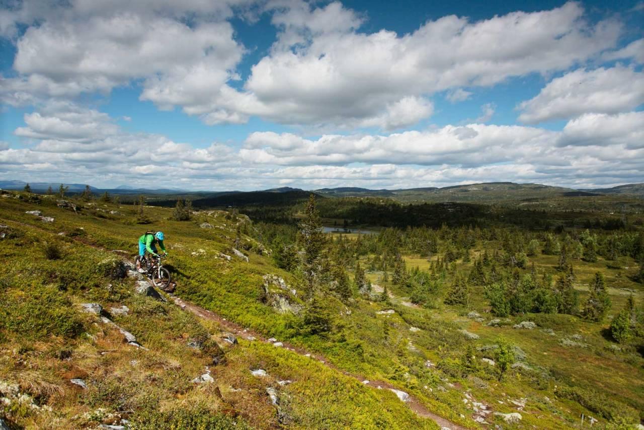 Det meste av terrenget rundt Skeikampen kan omtales som snaufjell, men ved Kyrakampen får Torger Fenstad likevel syklet litt mellom trær. / Stisykling i Norge.