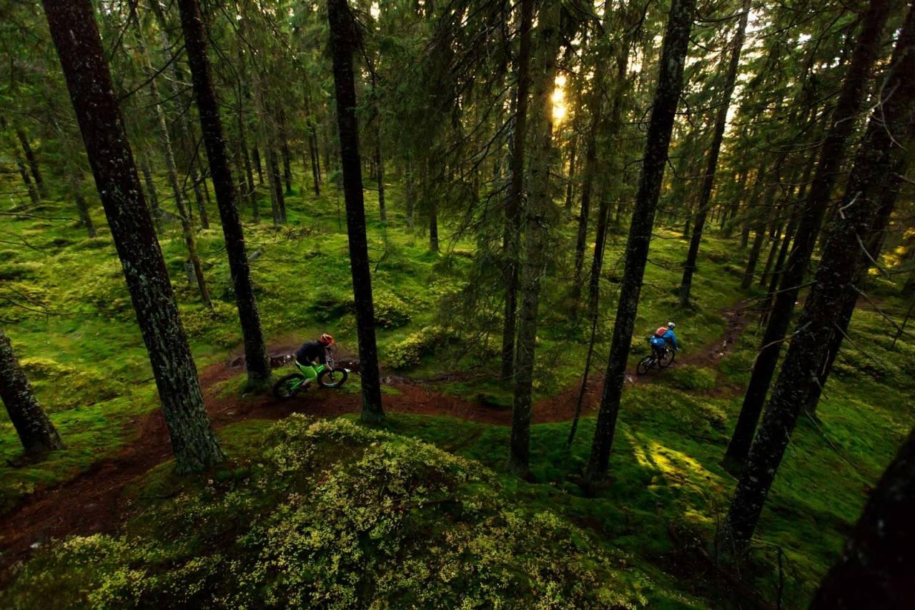 Lillomarka med sine frodige grønne skoger er et fotogent motiv. Knut Lønnqvist og Bård Sturla Stokke utnytter de siste solstrålene en sen høstkveld. / Stisykling i Norge.