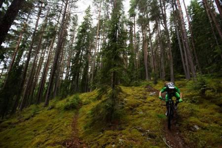Stien Riksvei 7 har fått navnet etter fra veien den krysser. Sverre Eckhoff syns skog er langt mer interessant enn riksvei. / Stisykling i Norge.
