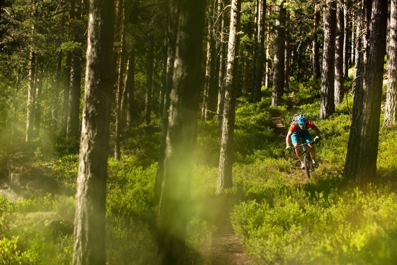Nedkjøringen fra Brennsetra til Bevergrenda består for det meste av raske stier gjennom barskogen. Sverre Eckhoff slipper på. / Stisykling i Norge.
