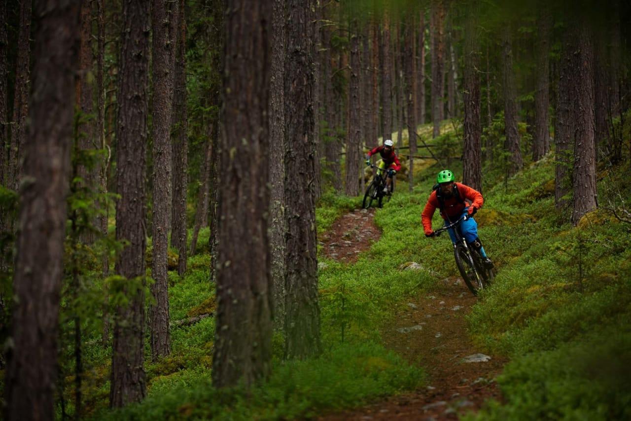 Stien fra Åsgardane ned til Gol sentrum har fått navnet Supergeil. Bjørn Jarle Kvande og Mathias Marley nyter den lange og morsomme utforkjøringen. / Stisykling i Norge.