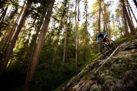 Bård Sturla Stokke slipper seg ned furuskogen mot Torpo, mens Ådne Kvammen ser på bak trærne. / Stisykling i Norge.