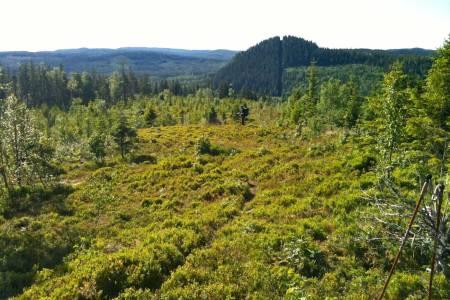 Finnskogsleden er ett av mange verneområder i Hedmark der Fylkesmannen bevisst omgår gjeldene føringer fra regjeringen og Stortinget. Foto: Björn Falkevik