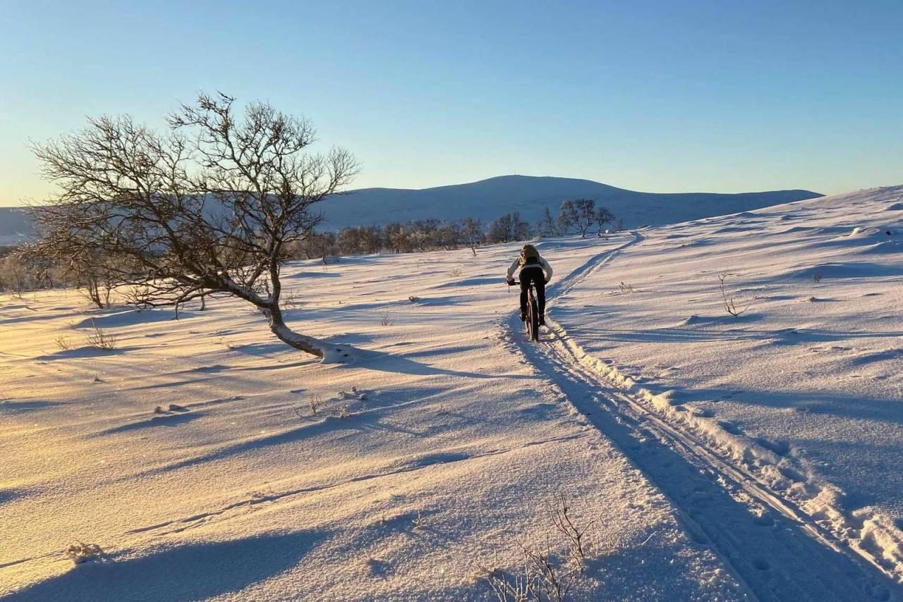 stisykling vinter 2021 barfrost fatbike