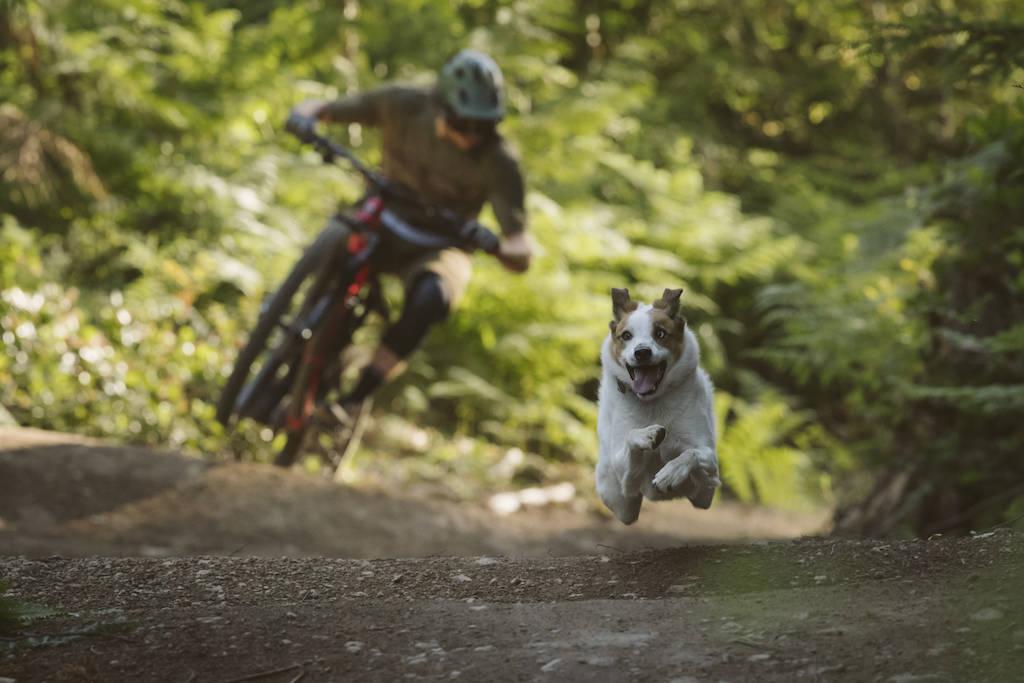 hund sykkeltur sykling