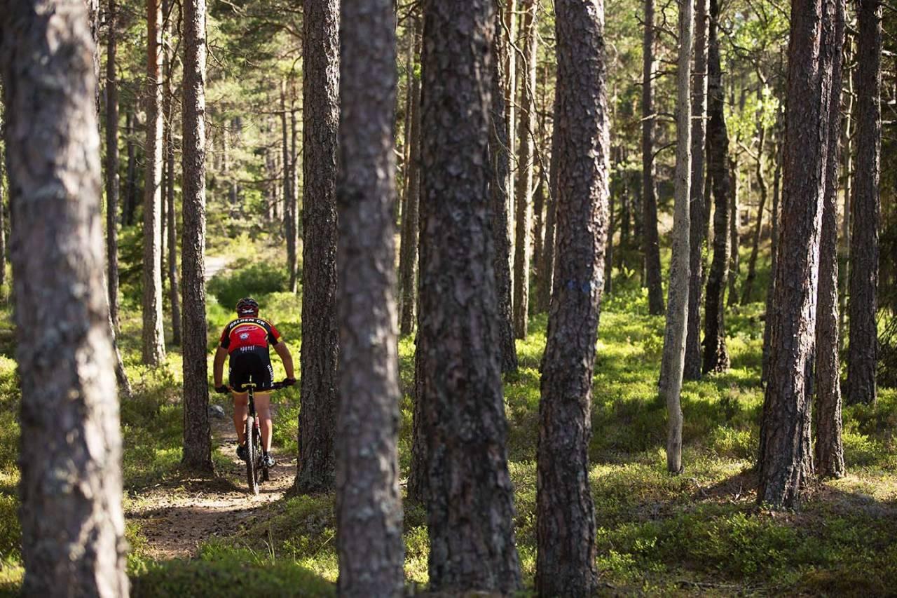 Traséen i det to dager lange Grenserittet Etappe er klar, og byr på mye flytsti i skogene på begge sider av svenskegrensa. Foto: Kristoffer Kippernes